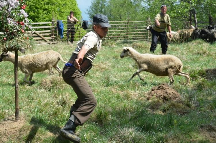 25-shepard-festival-maramures