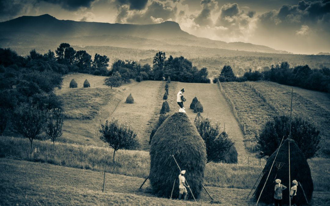 Making hay – before it rains in Maramures
